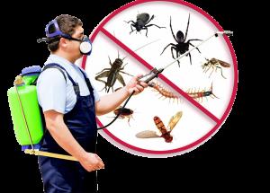 pest control kl